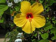Spain flower