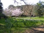 spring blossom & daffs