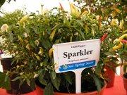 sparkler chilli