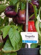 tequila chilli