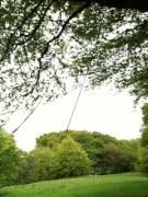 old rope swing