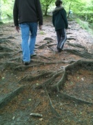 walking over roots