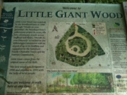 little giant wood sign