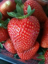 Prized fat strawberry