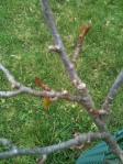 tree w few leaves