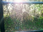web with sunshine