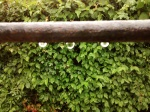 rain drops on fence