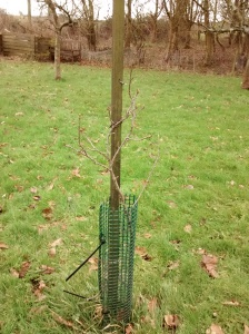 feb tree2