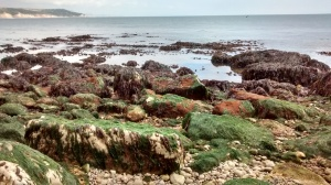 seaweed-shore