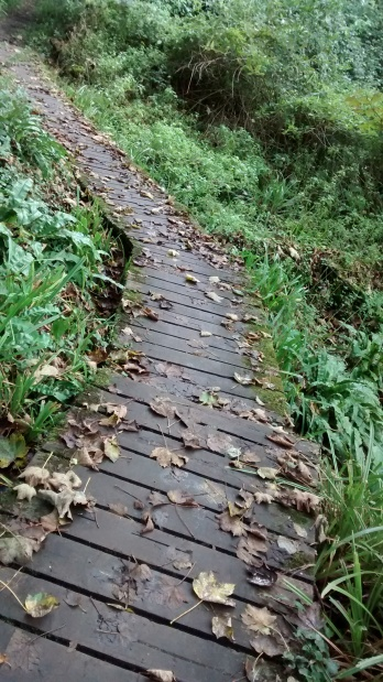 board-walk
