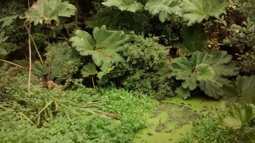 stagnant-pond